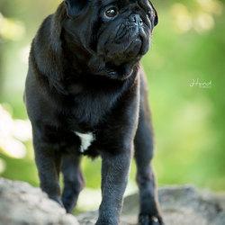 Best Dog Model