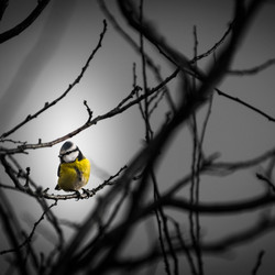 Bird in the spotlights