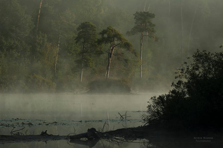 Standing out - Een prachtige ochtend met veel mist boven het Goorven in Oisterwijk.