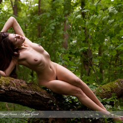 Art nude in the wood