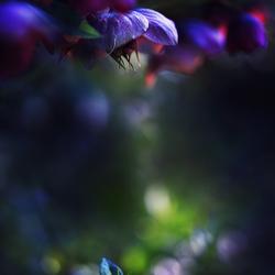 Midnight Flowers II