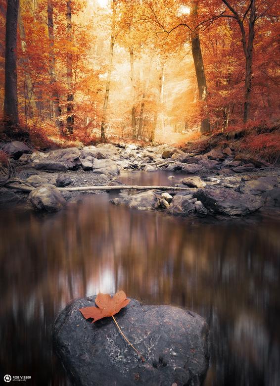 Fallen water - Ardennen