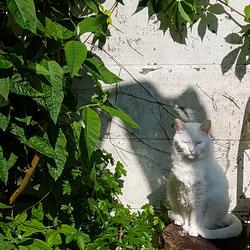 kleine witte boeddha