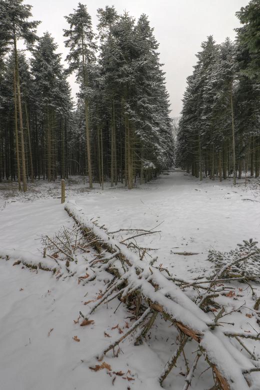 Boswachterij Dorst 3 - Laatste van de winter, heb er nog wel meer maar die zijn te zien op FB....als je bij de vorige foto naar links zou draaien zie