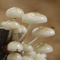 Twee vliegjes op een paddenstoel. Eentje zat er stil.