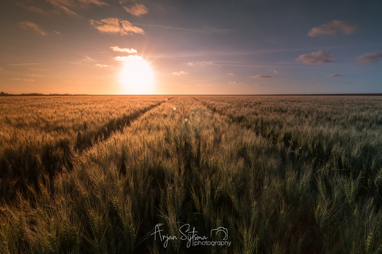 Warm zonlicht over een tarweveld -
