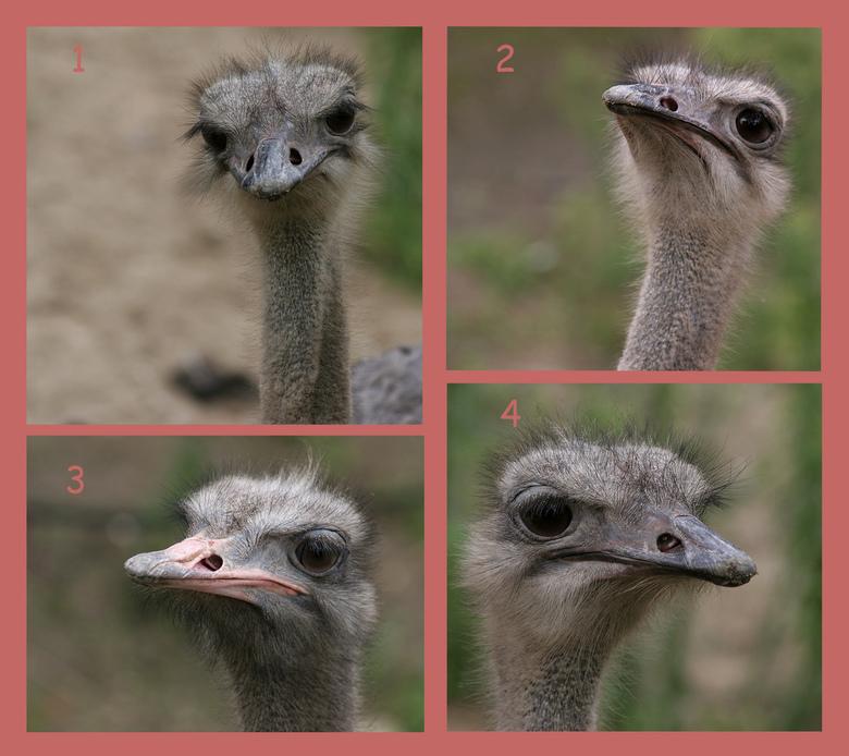 Struisvogelpolitiek - 1. (voorzitster): &amp;quot;En, zijn de heren eruit?&amp;quot; (knipperen met de oogwimpers)<br /> <br /> 2. (arro): &amp;quot