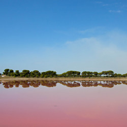 Salins du Midi, roze zoutmeer