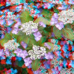 Bloemen in anaglyphen