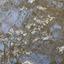Spiegeling van bloesem in het water