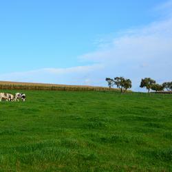 Het gras zal altijd groener zijn aan de andere kant van de heuvel.