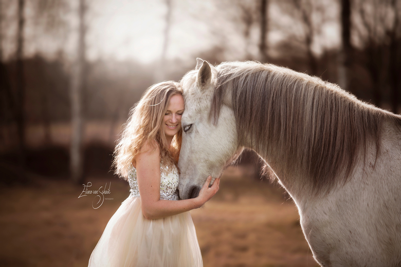 fairytale white horse