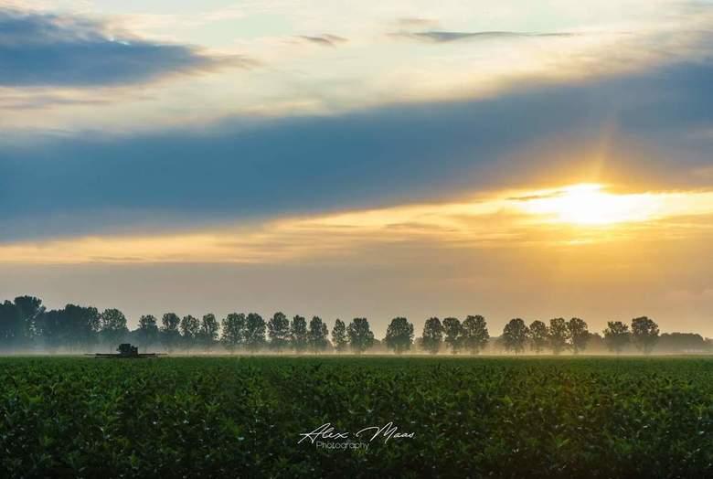 Golden Light  - Boerenlandschap met een laagje grondnevel en fijn zacht licht in de lucht ☀️