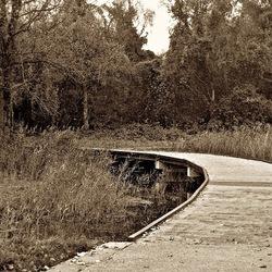 Voetpad rekerhout Alkmaar