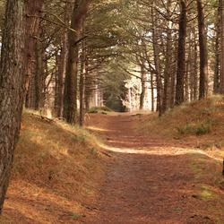 Licht door de bomen