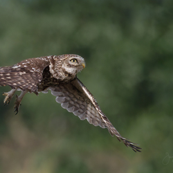 In flight.