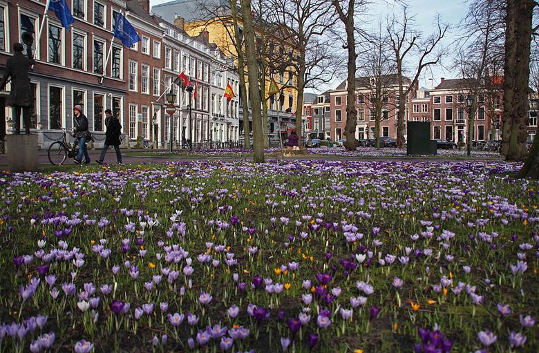"""Ze zijn er weer...... - de krokussen op het Lange Voorhout. Speciaal voor Eef die ooit in Den Haag woonde/werkte <img  src=""""/images/smileys/wilt.png""""/"""