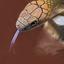 Slangen in natuurmuseum Leeuwarden