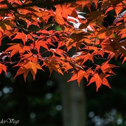 Japans rood