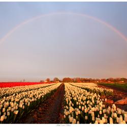 Regenboog in Oldenzijl