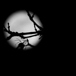 Blauwe maan(dag) vanuit een ander perspectief