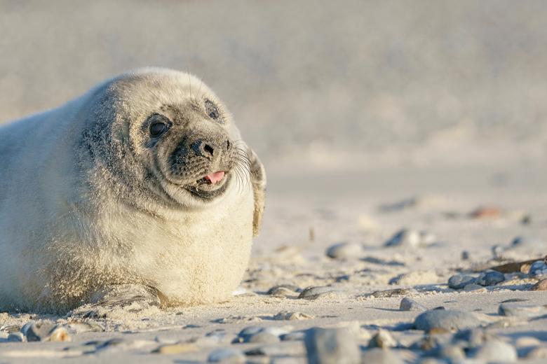 Meewerken - Deze zeehondenpup deed er alles aan om mij een mooie foto te bezorgen