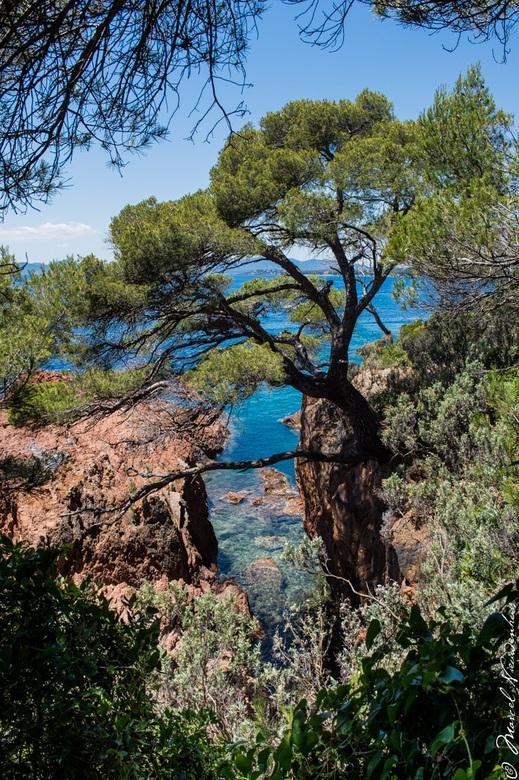Paradijsje aan de Côte d'Azur - Als je langs de kust wandelt aan de Côte d'Azur bij Agay en je niet laat stoppen door stekende braamstruiken of i