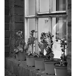 De vensterbank
