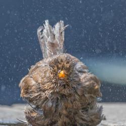 Net uit bad