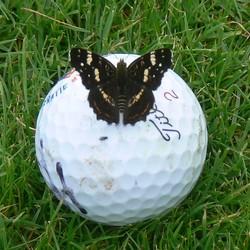 Landkaartje op golfbal