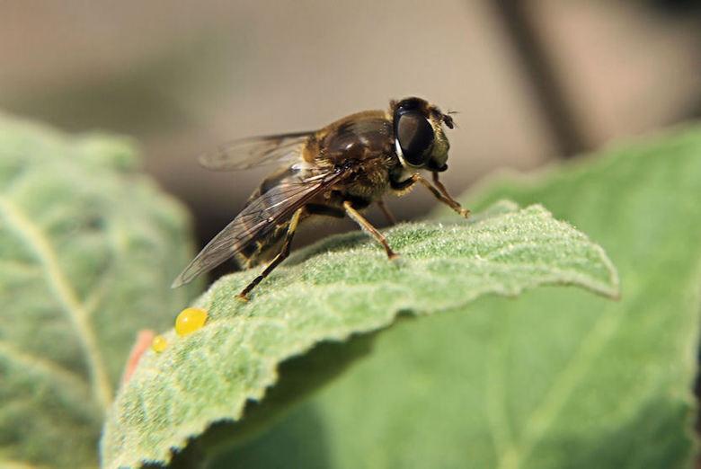 Bij met nectar -