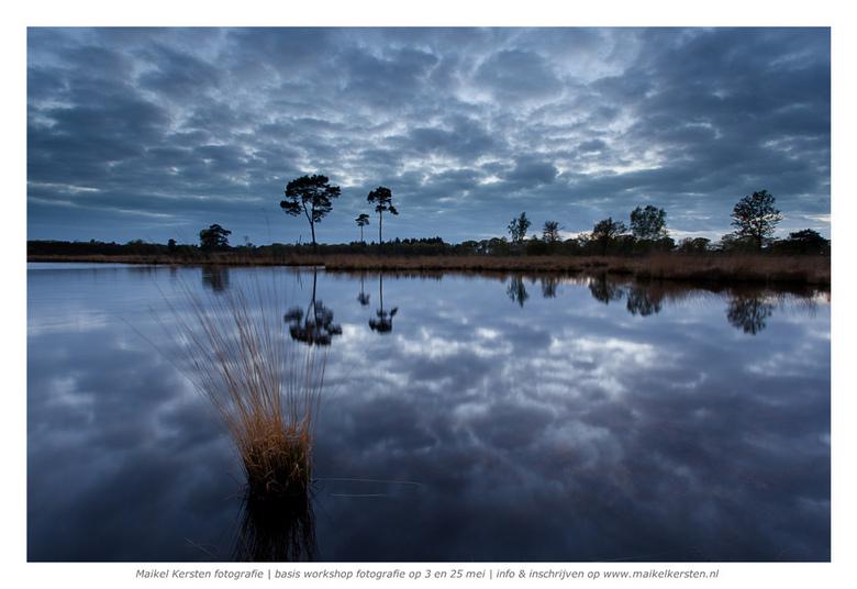 Reflections of nature   Hatertse vennen   Nijmegen