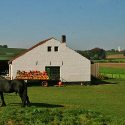 pompoenenfarm