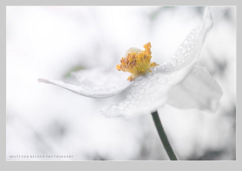 White Dreams -