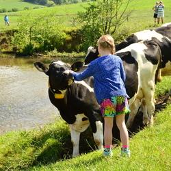 Bewerking: de koe en het meisje...
