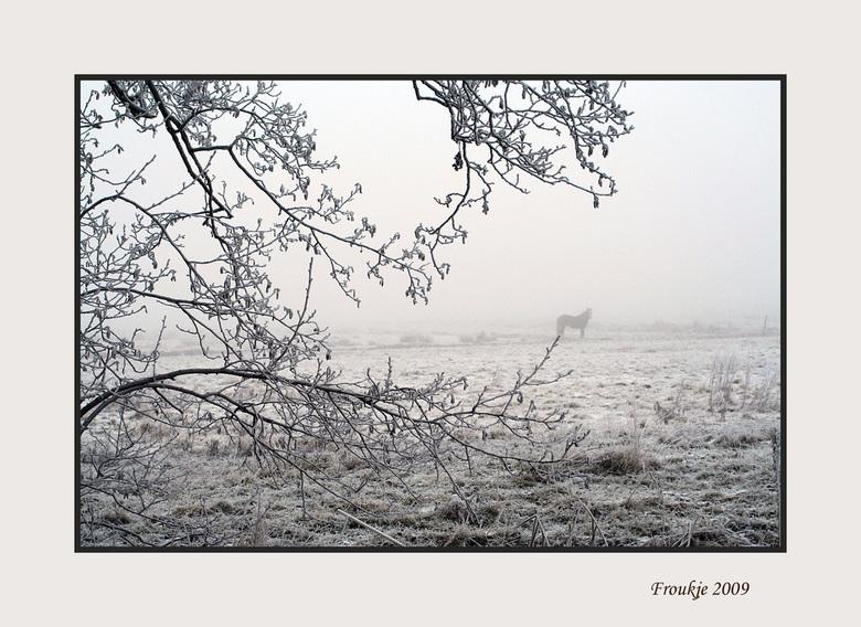 Mist - Laatste dag van het jaar nog een rondje in de natuur gemaakt voor wat winterfoto&#039;s ,dit is er één van .<br /> Bedankt voor de reacties op