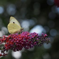 Mooie Natuur 2