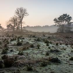 Laatste Heide - Bergen op Zoom