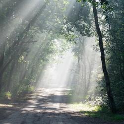 zonnestralen in de ochtend