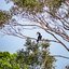 Sigiriya - malabarneushoornvogel