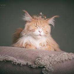 Wodan the sleepy king