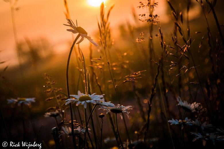 Goldenhour! - Vanmorgen al vroeg de wekker gezet om te genieten van de prachtige zonsopkomst. <br /> Puur genieten!<br /> <br /> Allemaal een fijne