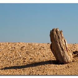 Woestijn  ( vervolgd )