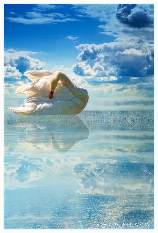 """SWAN IN HEAVEN.. - Maar weer eens een zwaan, heb er nog veel en moet ze toch kwijt <img  src=""""/images/smileys/wilt.png""""/>"""