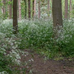 bos met fluitekruid-