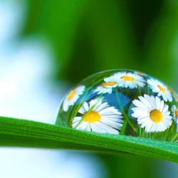 Druppel op grasspriet