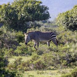 Zuid-Afrika 65