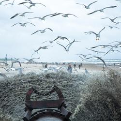 beachbirds 2/6