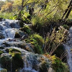 Nature Georgië 1