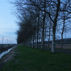 Berkenlaan langs de Oesterdam